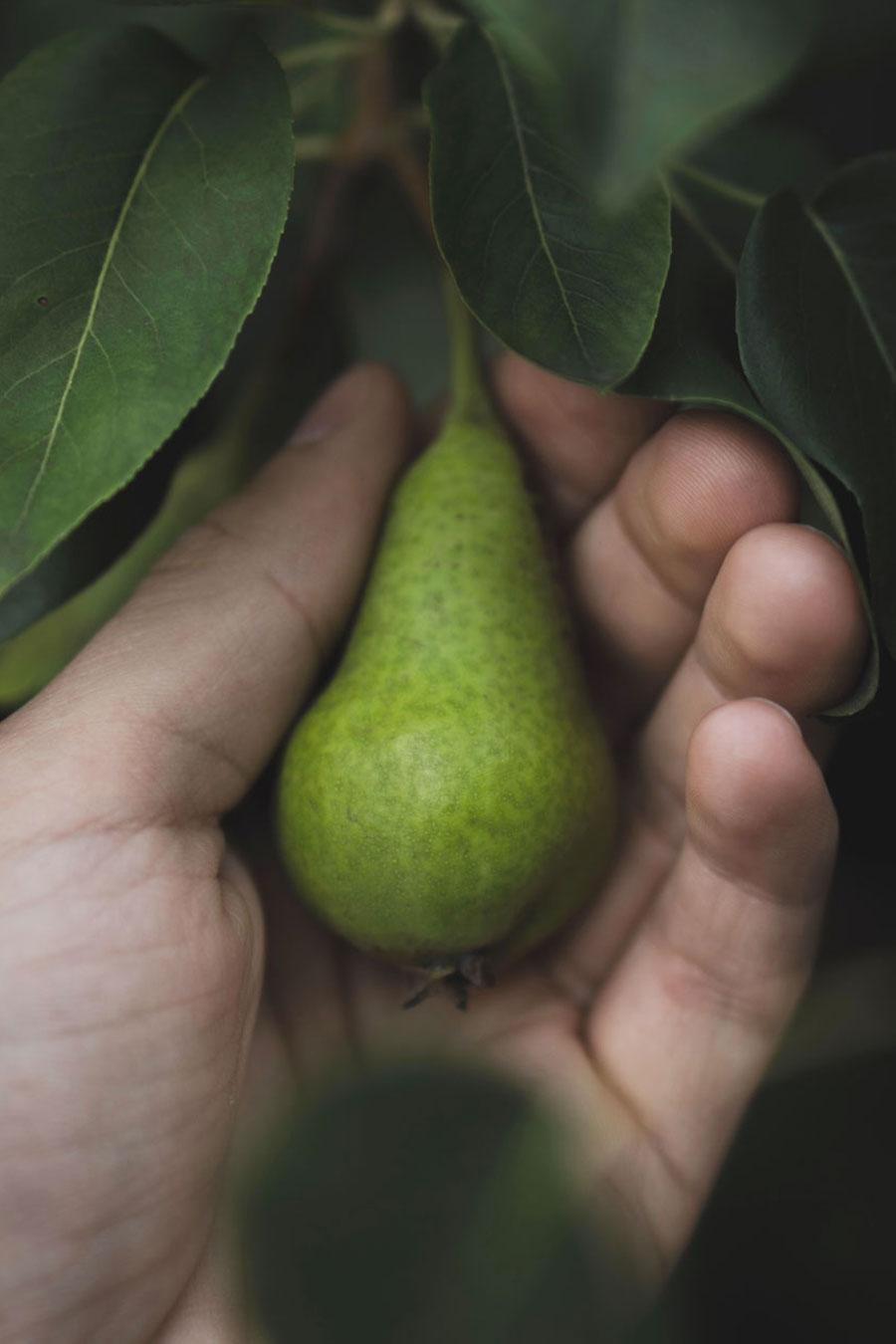 pere-romana-frutta
